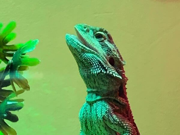 Critter contest