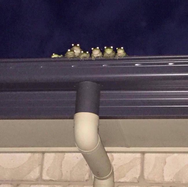 When your herp-loving neighbor upgrades their surveillance system…